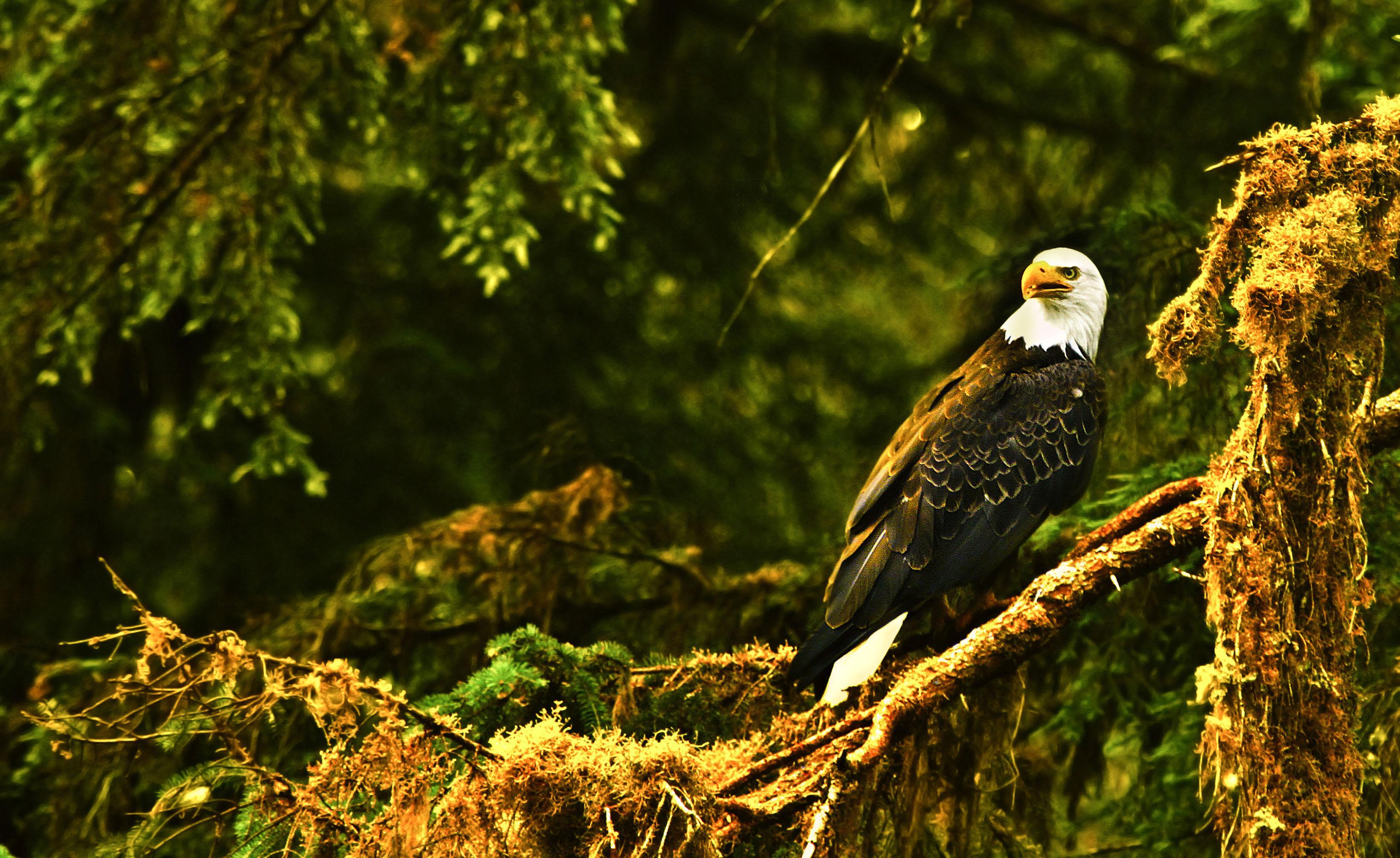 HDoboi.Kiev.ua - Птица орел сидит на ветке в лесу