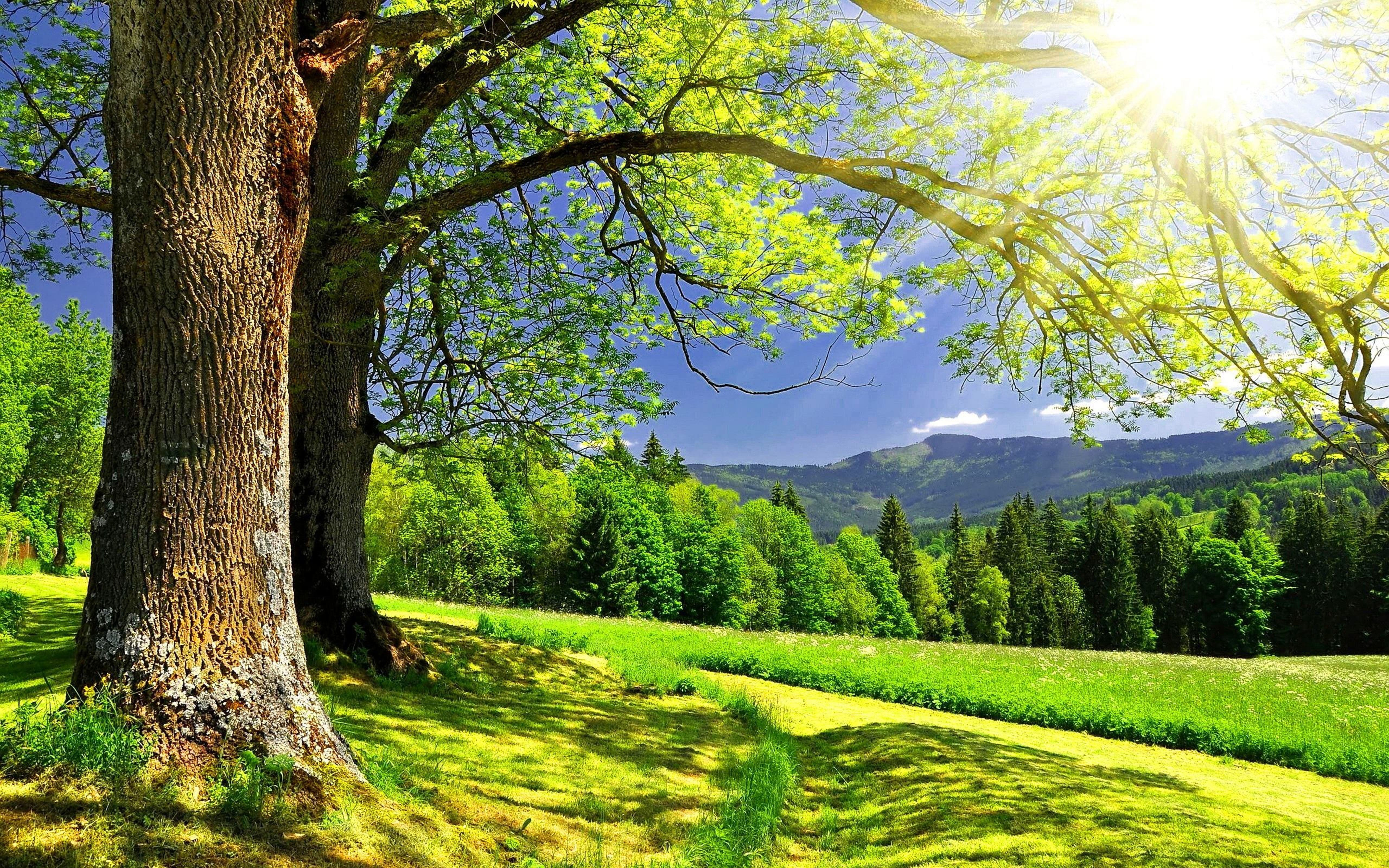 Зеленые деревья под солнцем, обои пейзажи лето, природа, 5120 на 3200 пикселей