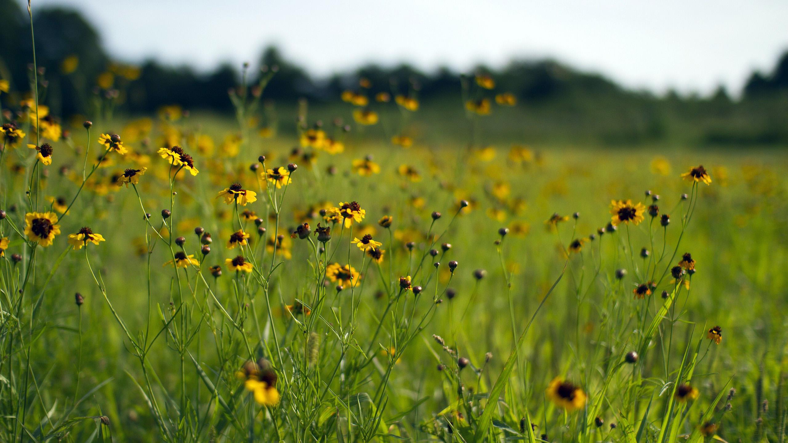 HDoboi.Kiev.ua - обои начало лета, лето, цветы, поляна, зелень, природа, времена года