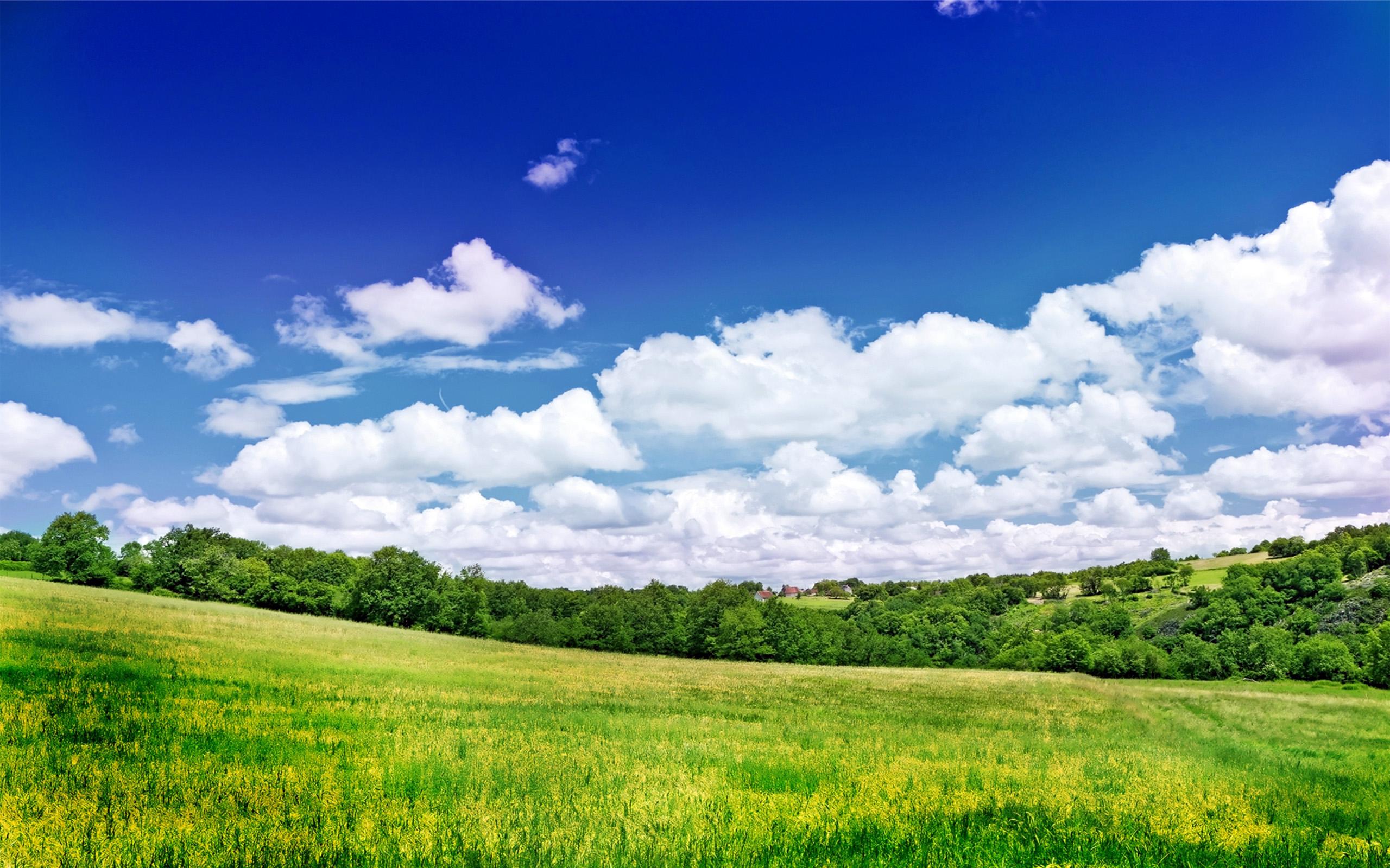 Зеленая лужайка летом, скачать обои на телефон лето, 2560 на 1600 пикселей
