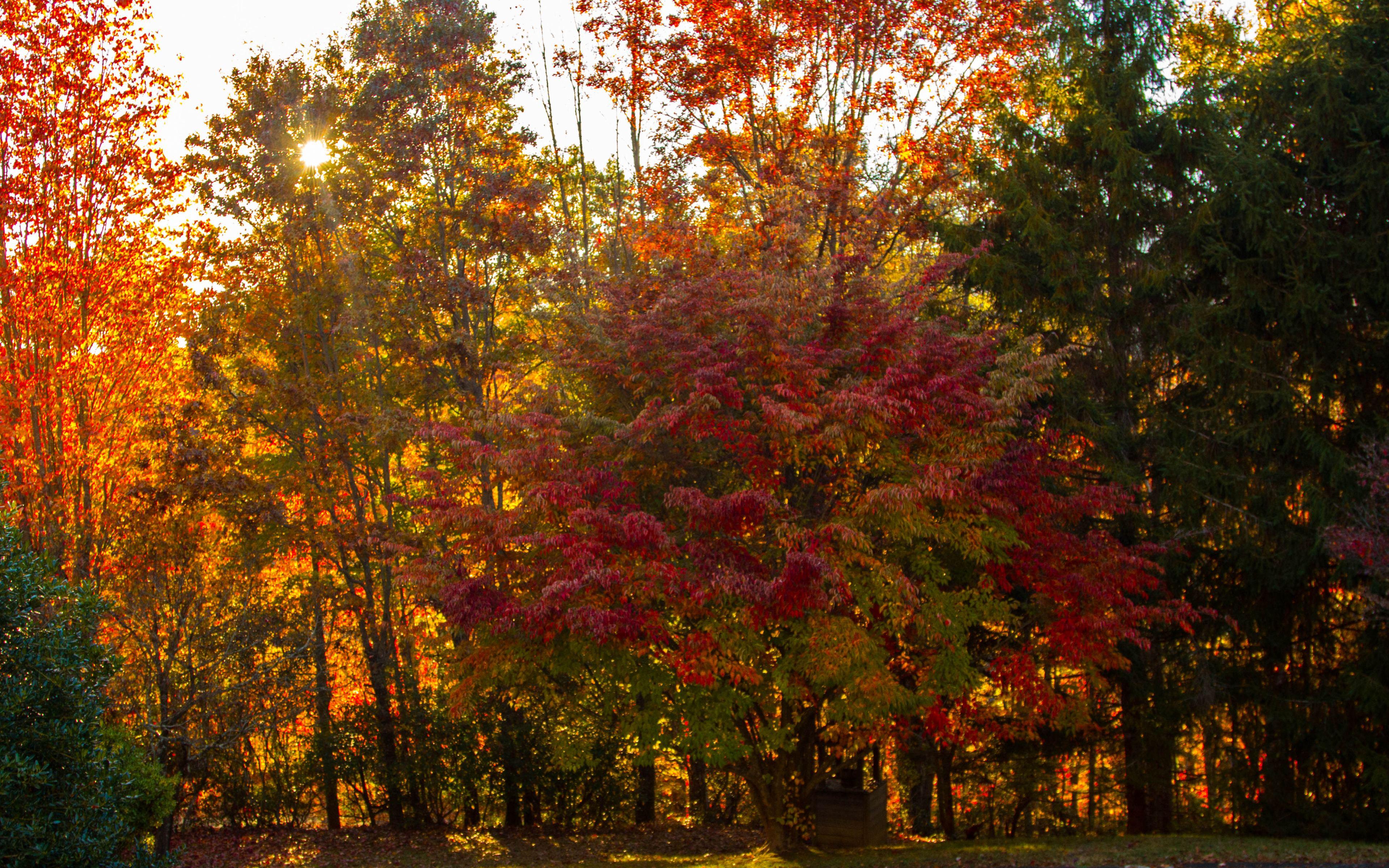 HDoboi.Kiev.ua - Яркие осенние деревья, 4k full hd Wide 16:10, красивая осень картинки для заставок бесплатно
