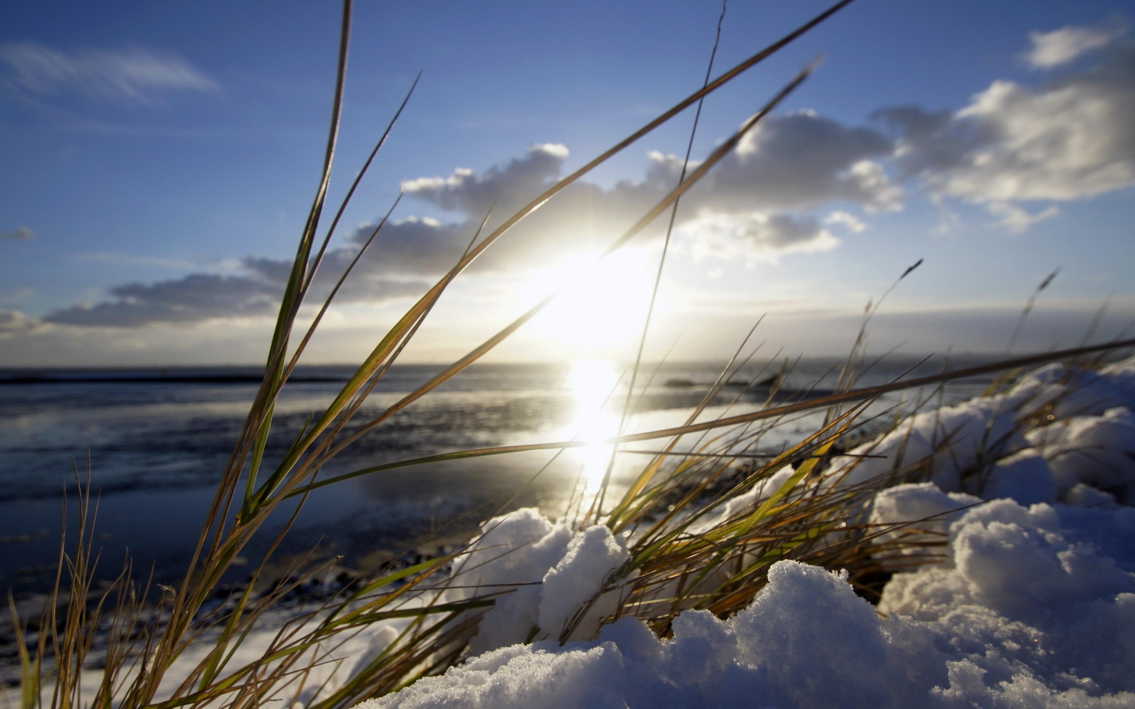 HDoboi.Kiev.ua - обои весна снег, трава, природа