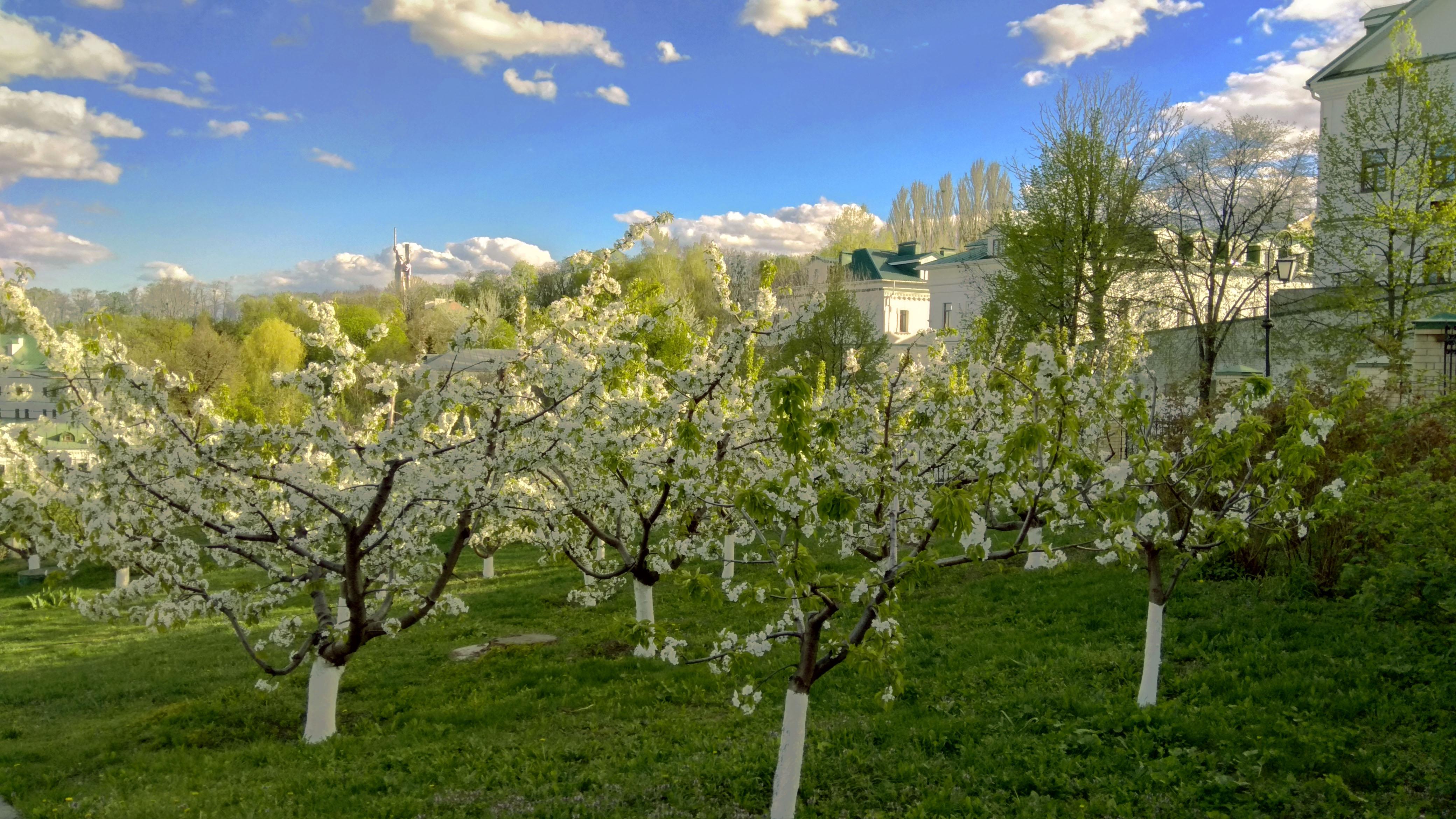 широкоформатные обои для рабочего стола ранняя весна, абрикосы, цветение, 4160 на 2340 пикселей