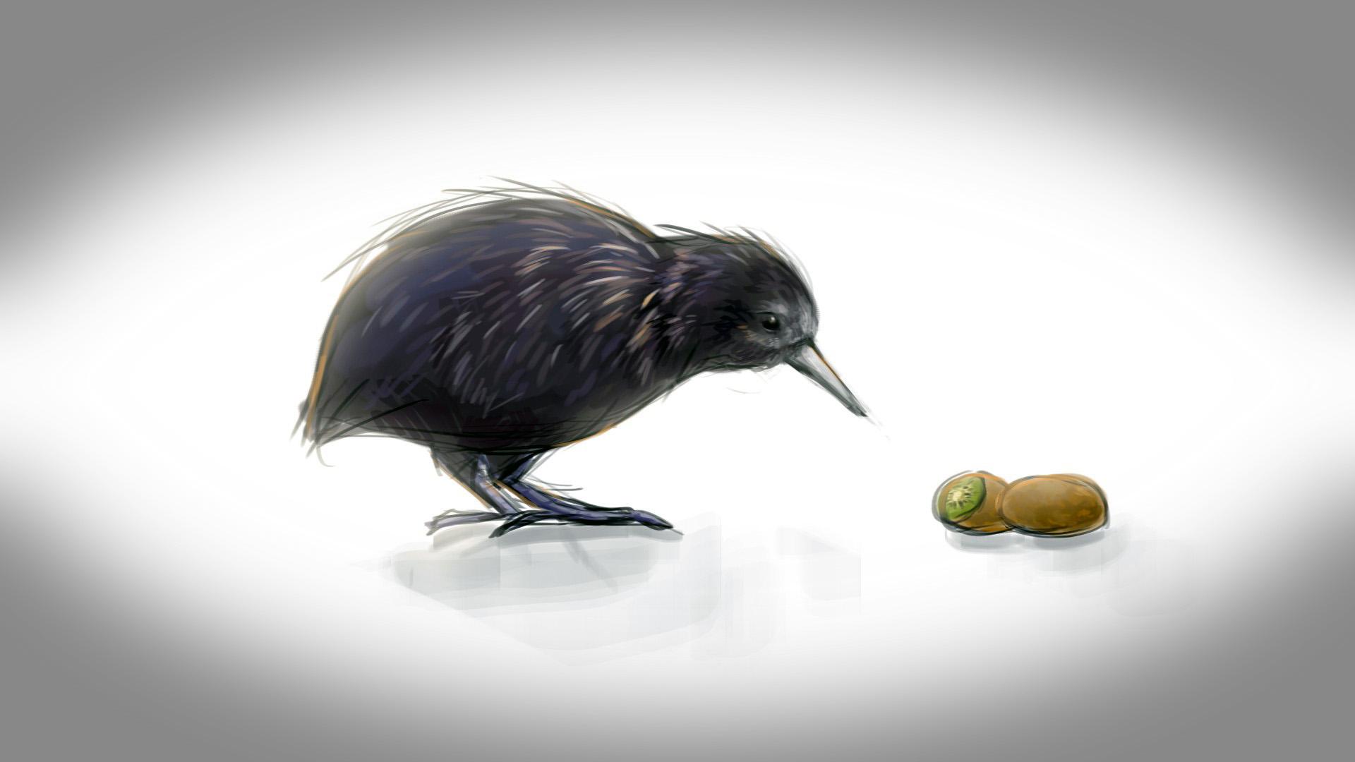 Птица киви full HD, птицы обои на айфон 5, 1920 на 1080 пикселей