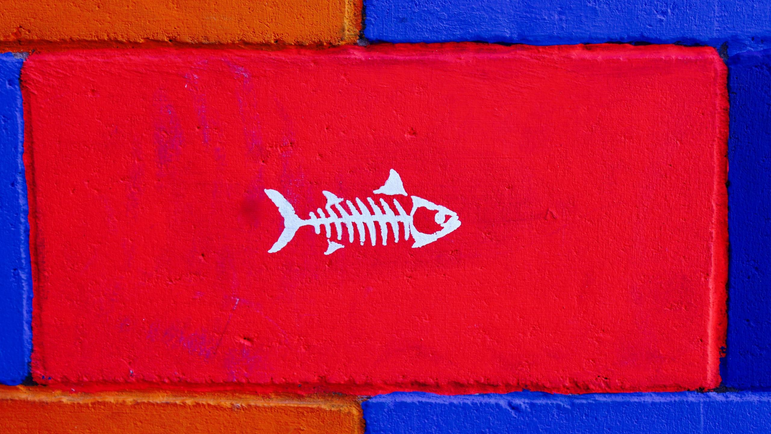 HDoboi.Kiev.ua - Скелет рыбы на красном фоне, обои с рыбами