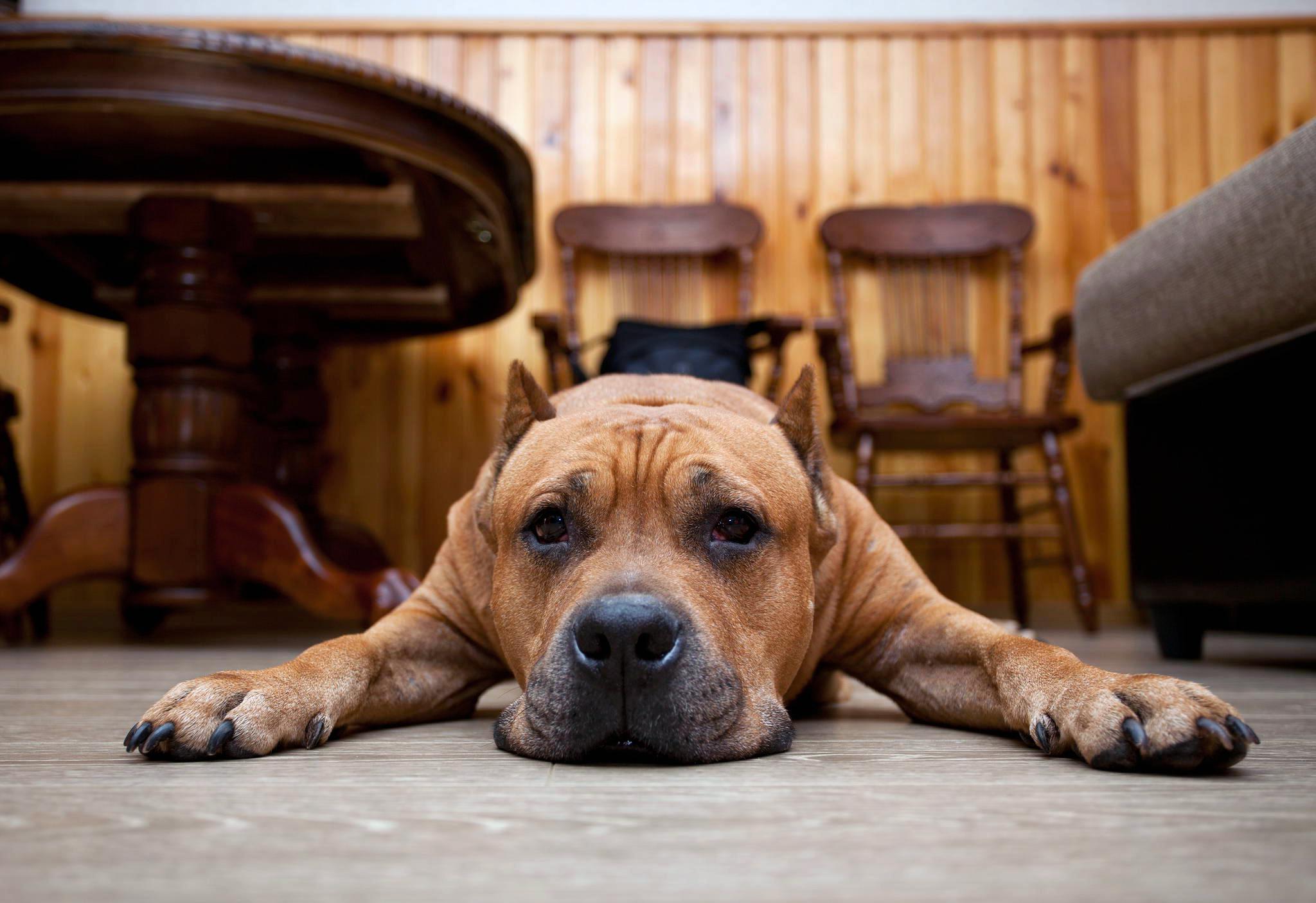 Милый песик на полу, скачать обои собаки на рабочий, 2048 на 1406 пикселей