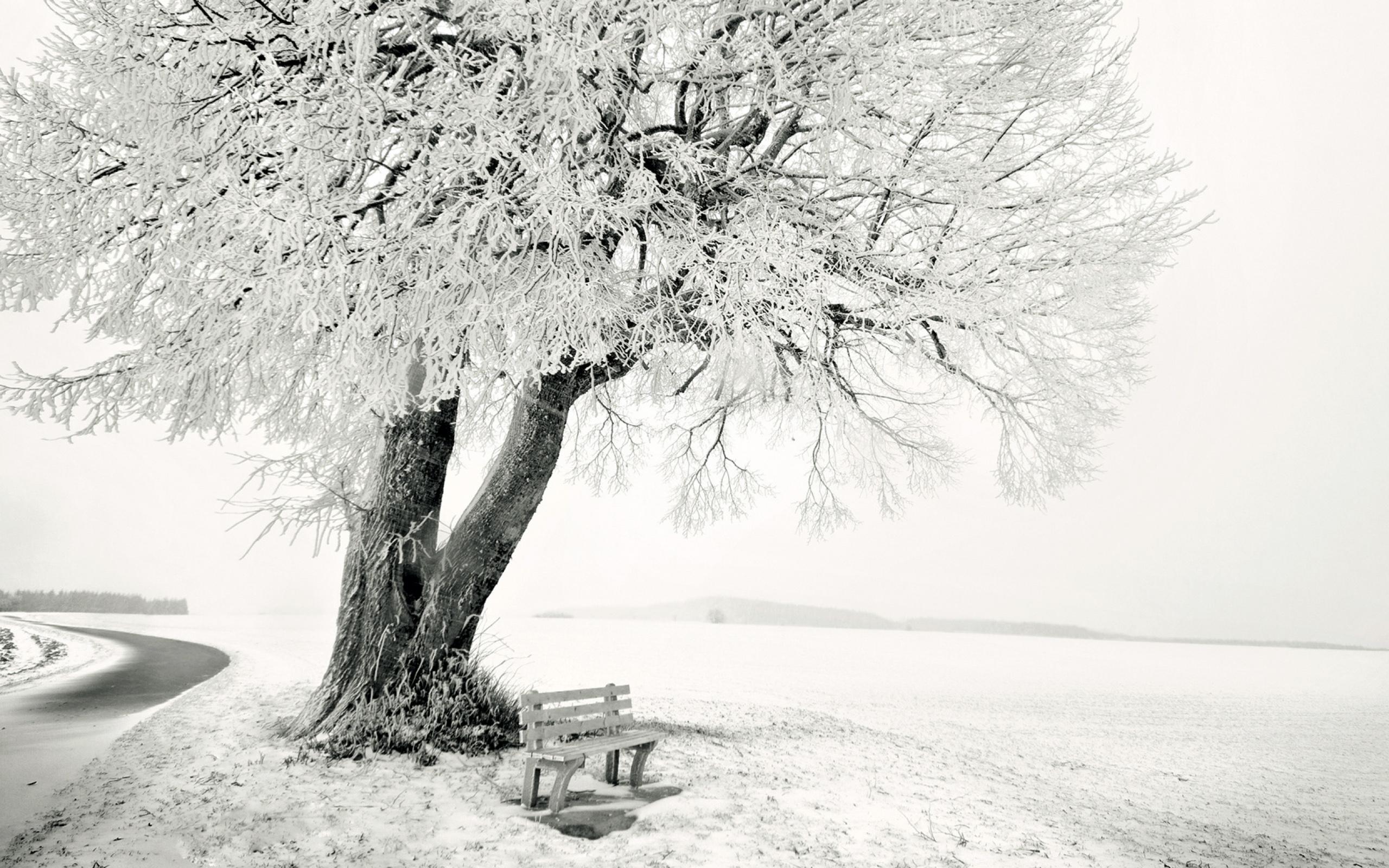 HDoboi.Kiev.ua - Присыпанное дерево снегом, обои зима снег