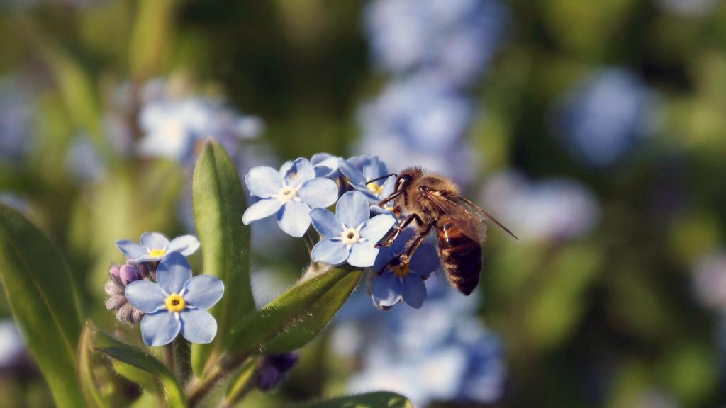 Пчела сидит на цветке макросъемка, обои макро для ноутбука, природа, насекомые, животные, 2560 на 1440 пикселей