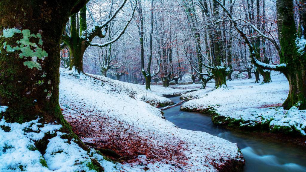 Зимний лес обои, 3840 на 2160 пикселей