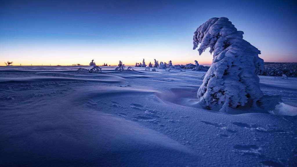 Заснеженные деревья на закате зимой, 5120 на 2880 пикселей