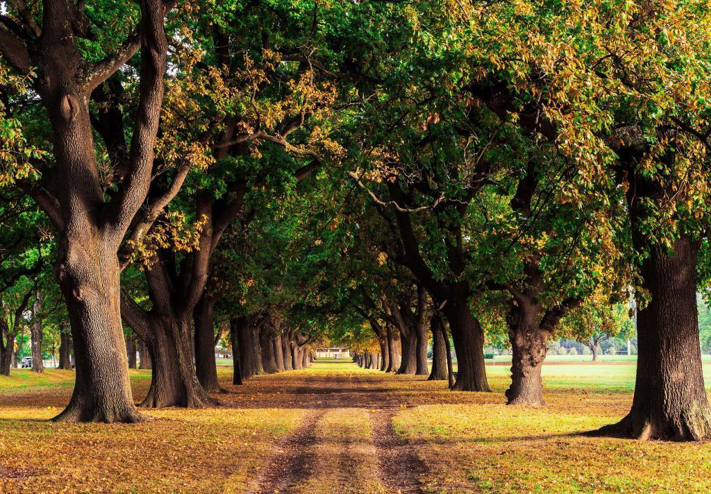 Деревья с опавшей листвой осенью, красивые заставки на фото осень, 3840 на 2670 пикселей