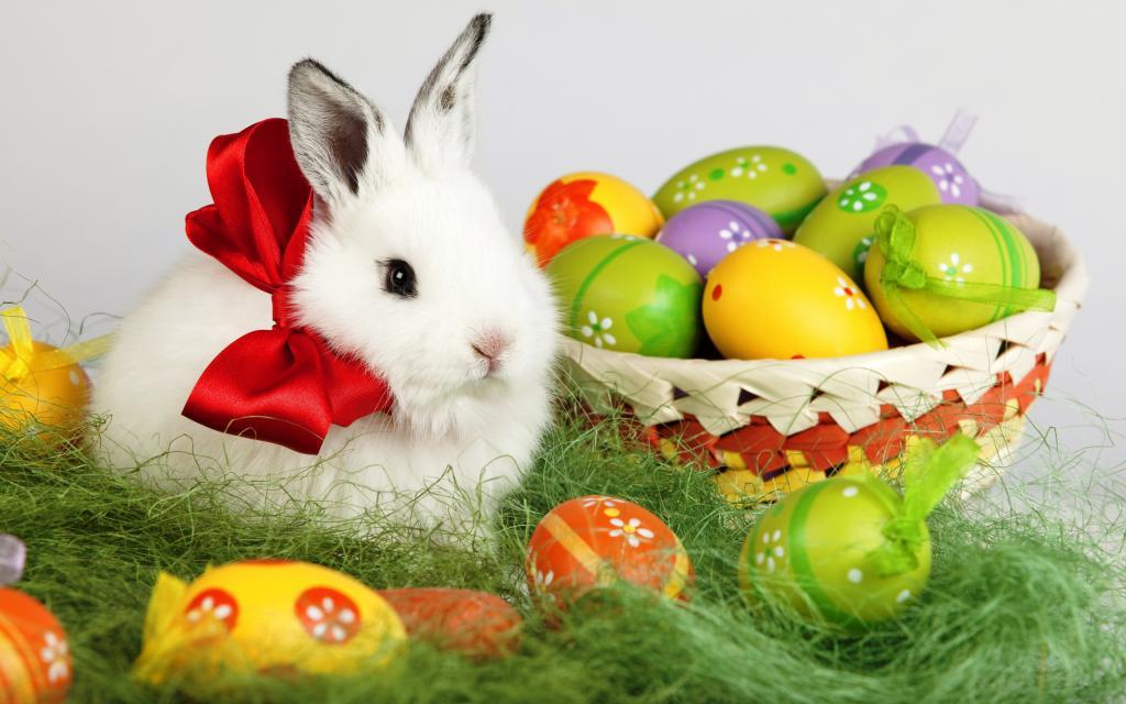 Белый пушистый кролик 4k с пасхальными яйцами, 2560 на 1600 пикселей