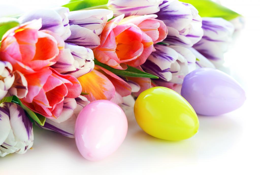 Крашеные яйца и разноцветные тюльпаны на Пасху, 4000 на 2687 пикселей