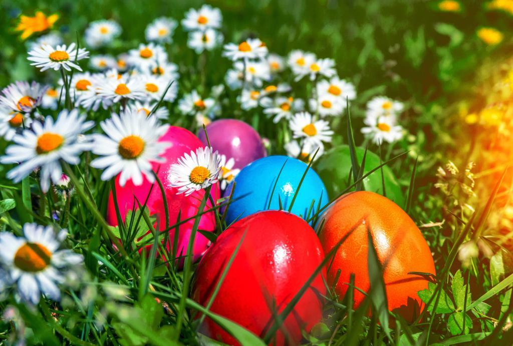 Разноцветные пасхальные яйца в ромашковом поле, 4441 на 3000 пикселей
