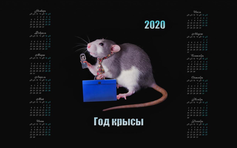 Календарь 2020 с крысой на черном фоне, 2560 на 1600 пикселей