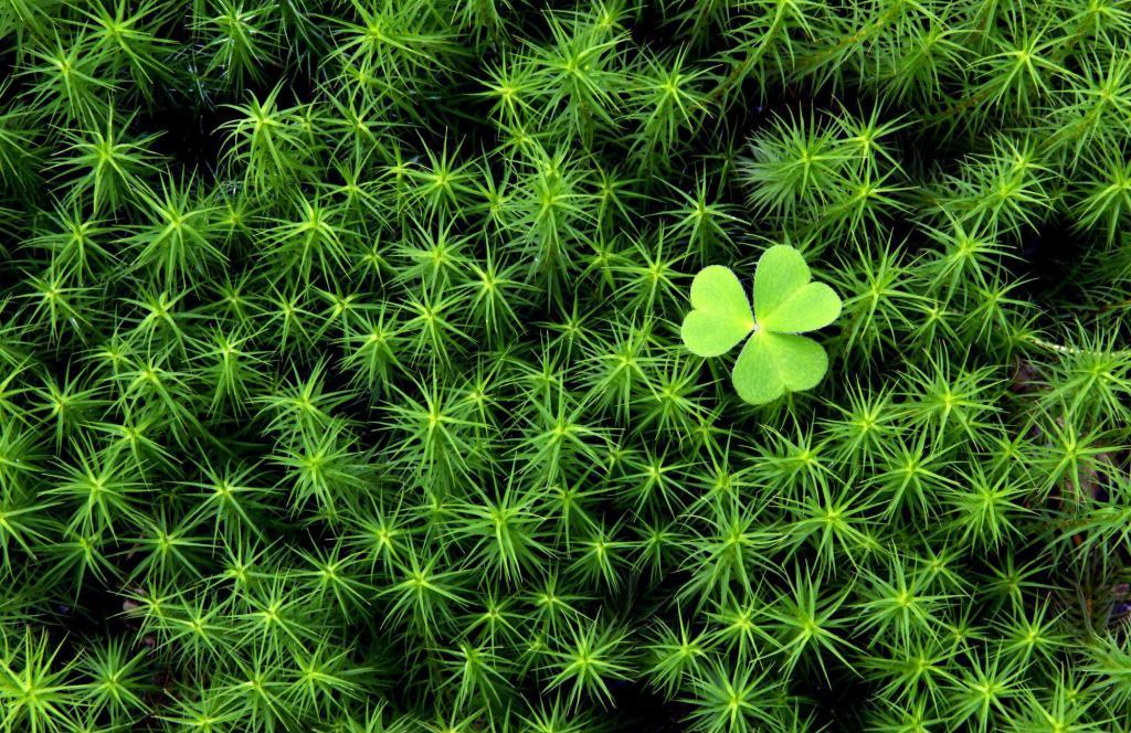 Густая зеленая трава, зеленые растения обои, 2000 на 1297 пикселей