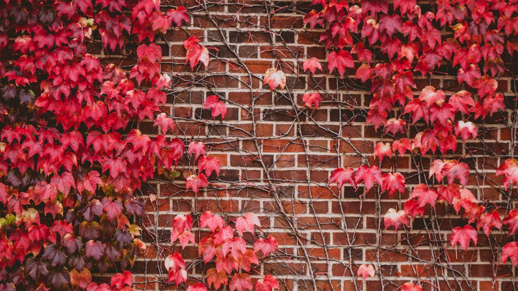 Ветви с красными листьями на кирпичной стене, заставки ultra hd 4k, 3840 на 2160 пикселей