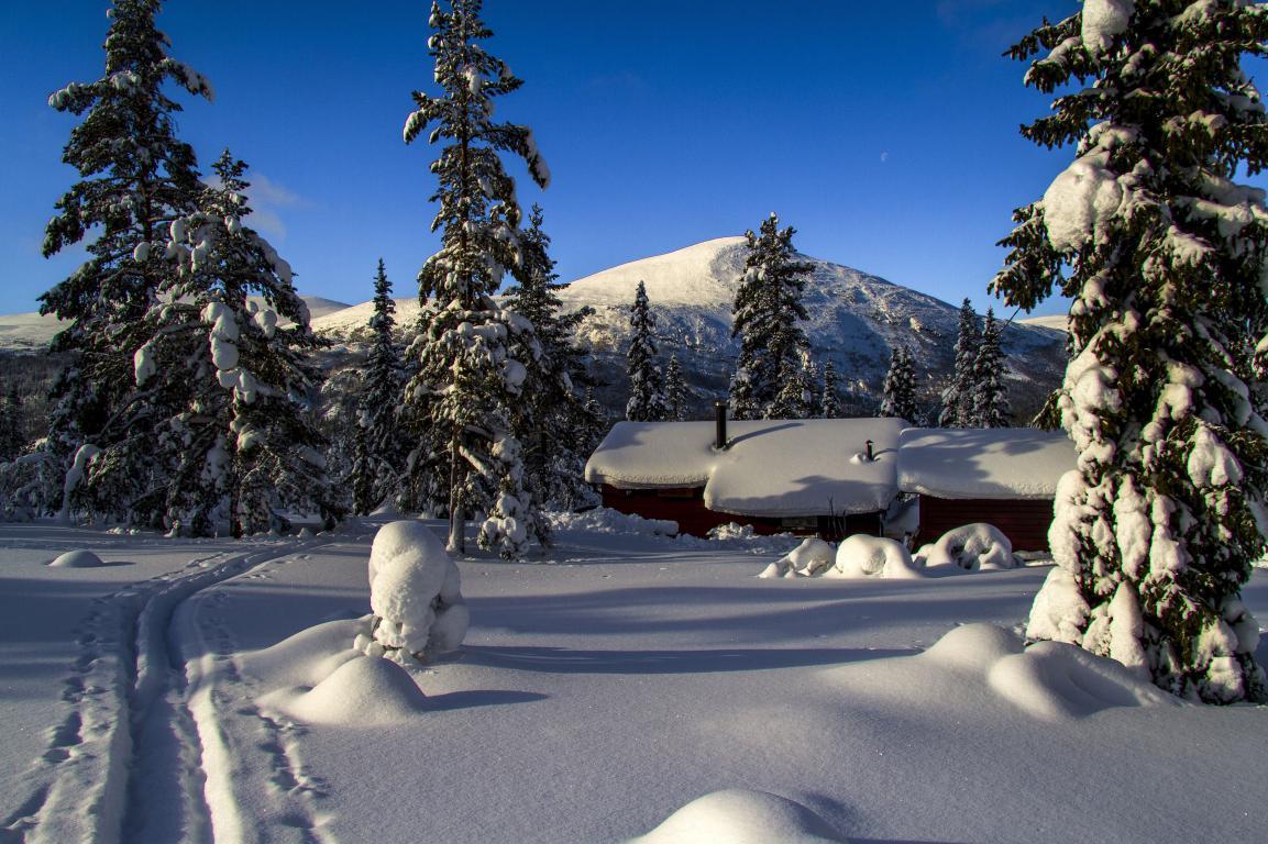Лес среди гор покрытый снегом зимой, 5180 на 3450 пикселей
