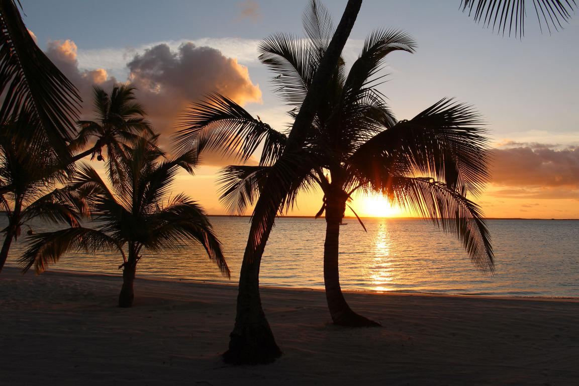Пальмы на берегу моря на закате солнца, 3600 на 2400 пикселей