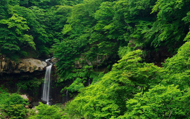 Маленький водопад в густых зеленых зарослях, 2560 на 1600 пикселей