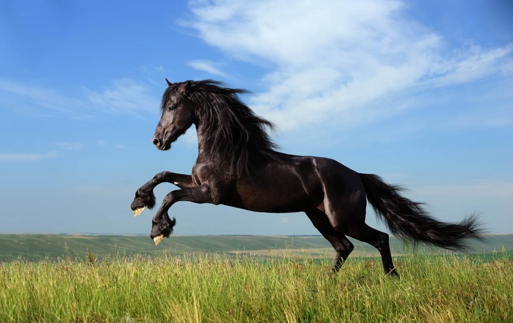 Черный конь в поле, обои на компьютер лошади, 4502 на 2832 пикселей