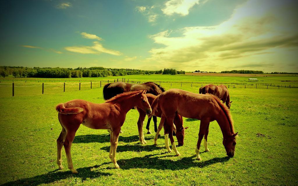 Лошадки пасутся на зеленой поляне, обои коней скачать, 1920 на 1200 пикселей