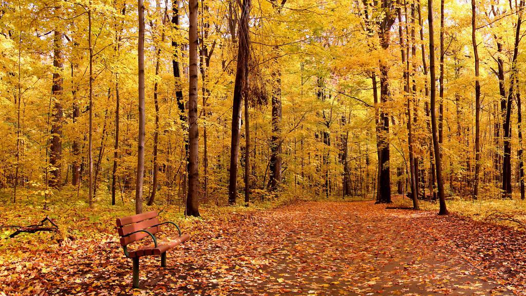 Осенний пейзаж в лесу, обои на телефон андроид осень, 3840 на 2160 пикселей