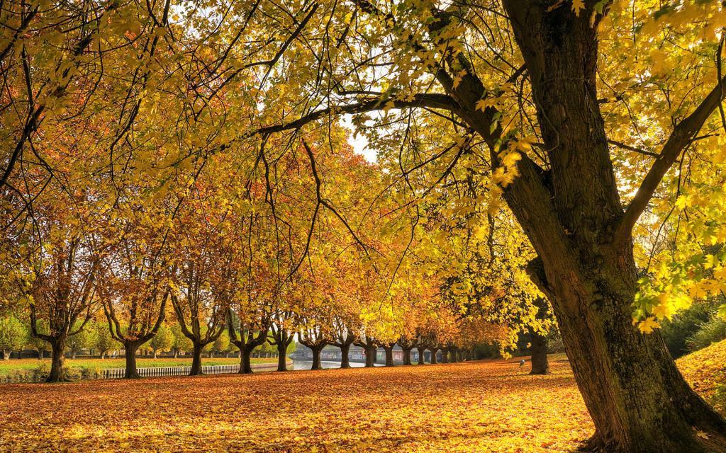 Золотая осень в парке, осенние обои на ноутбук, hd заставки, 1920 на 1200 пикселей
