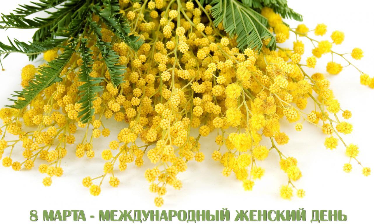 Желтая мимоза на 8 марта, цветы, 3840 на 2300 пикселей