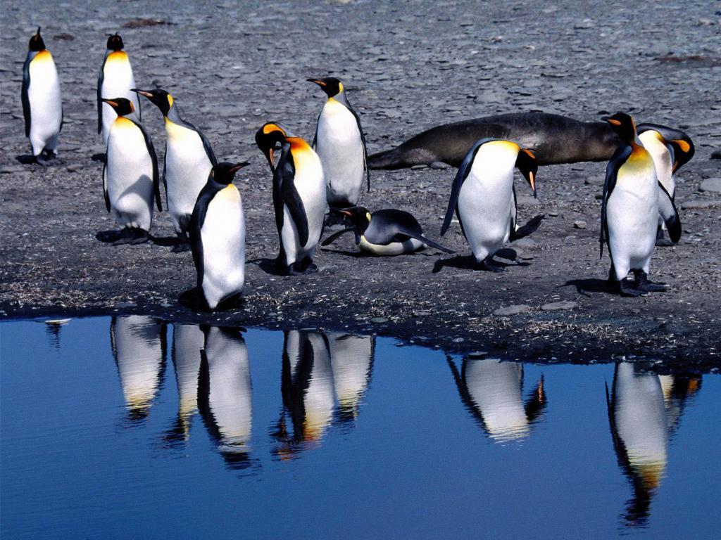 Пингвины на берегу в оттепель, обои на телефон красивые птицы, 5120 на 3840 пикселей