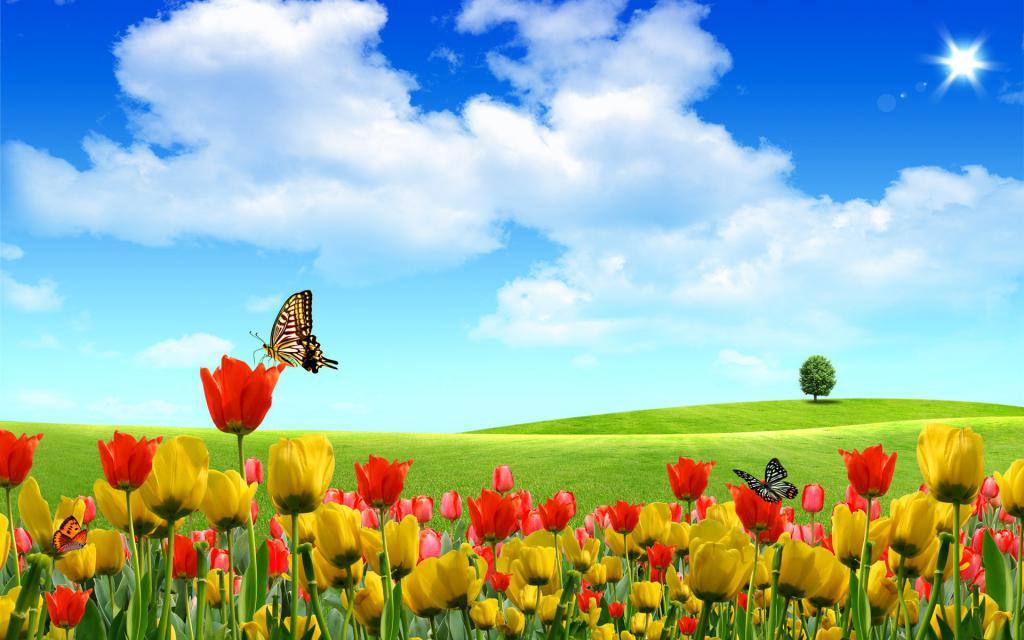 рабочие обои лето цветы, Бабочки, тюльпаны, летний день, 1920 на 1200 пикселей