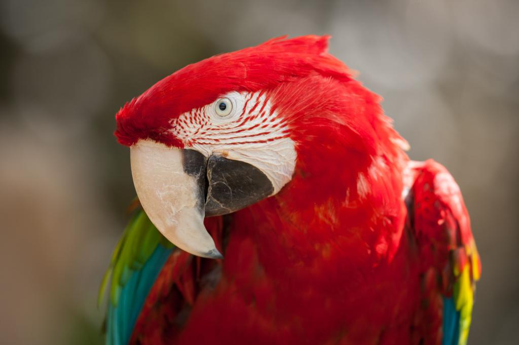 Обои птицы попугаи Ара, 3888 на 2592 пикселей