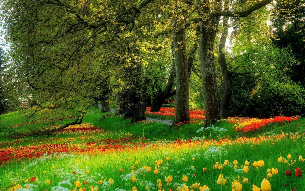 Красивая цветочная поляна цветов в парке, обои на стол лето цветы, 1920 на 1200 пикселей