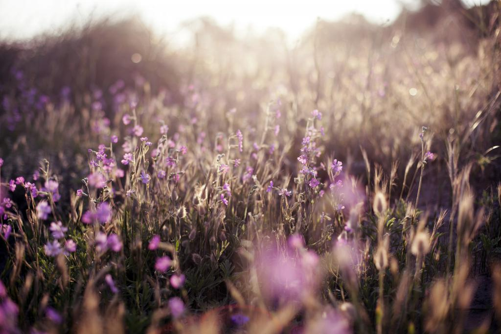 Сиреневые цветы, фото лето обои, летние заставки 4к, 3840 на 2560 пикселей