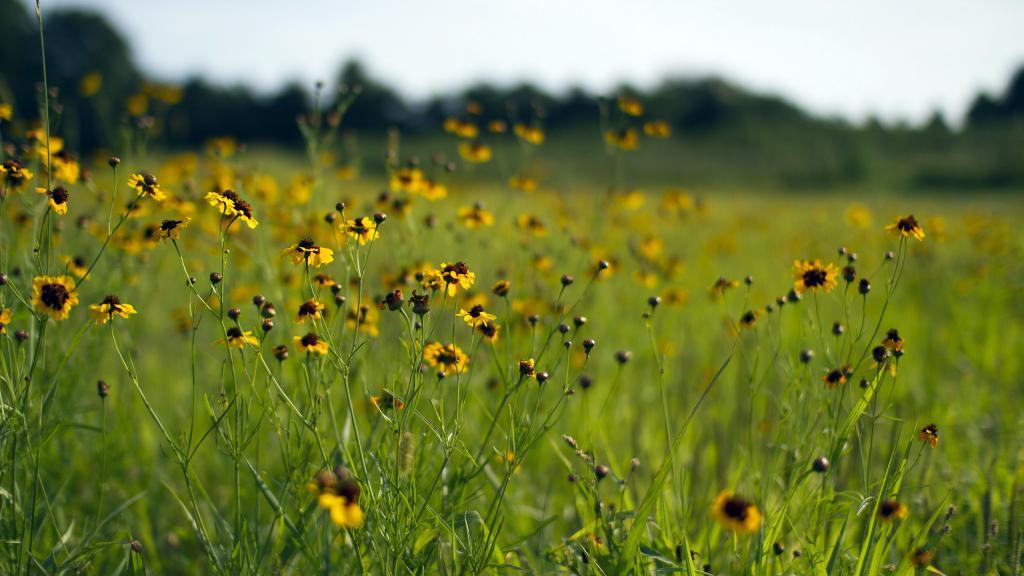 обои начало лета, лето, цветы, поляна, зелень, природа, времена года, 2560 на 1440 пикселей