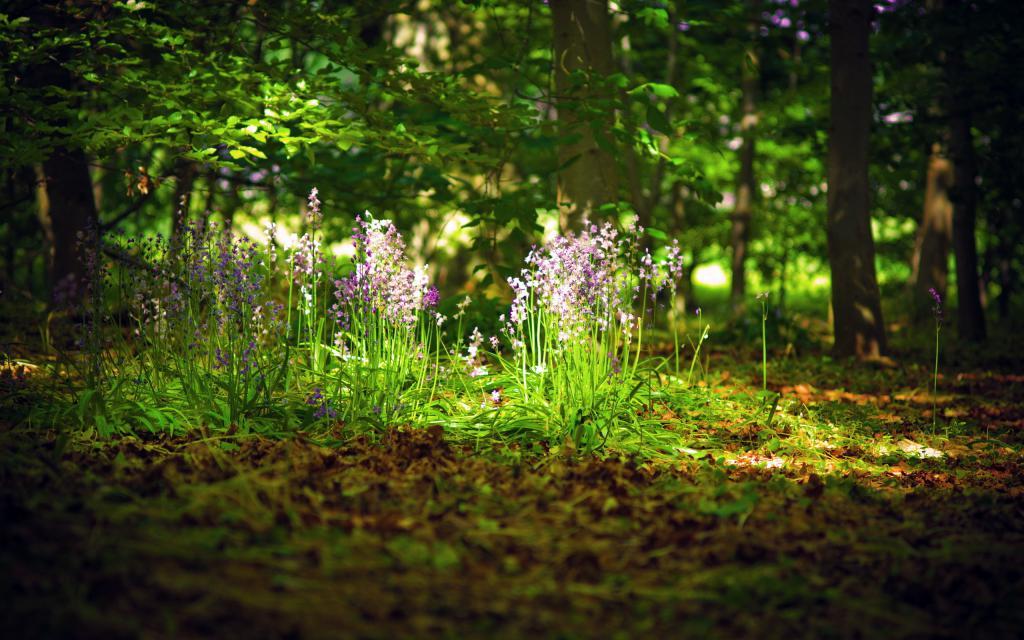 Цветы на поляне в лесу, обои про лето, 2560 на 1600 пикселей
