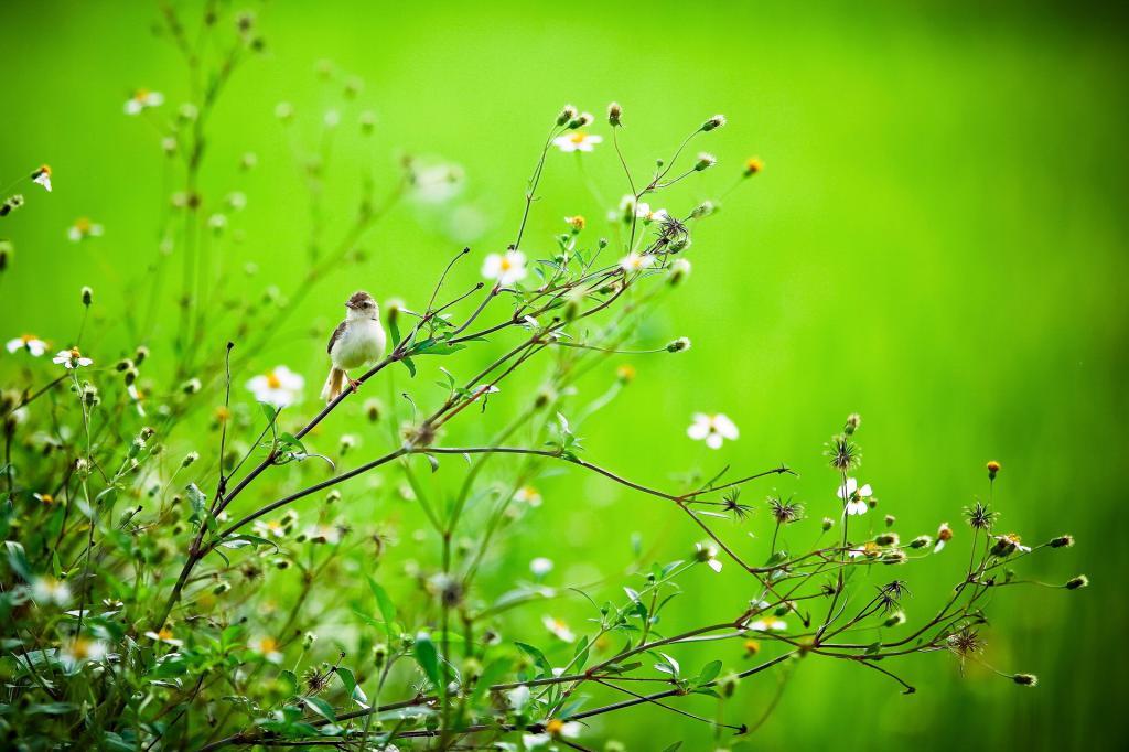 лето животные обои, ветка, зелень, лето, птица, природа, 1920 на 1280 пикселей