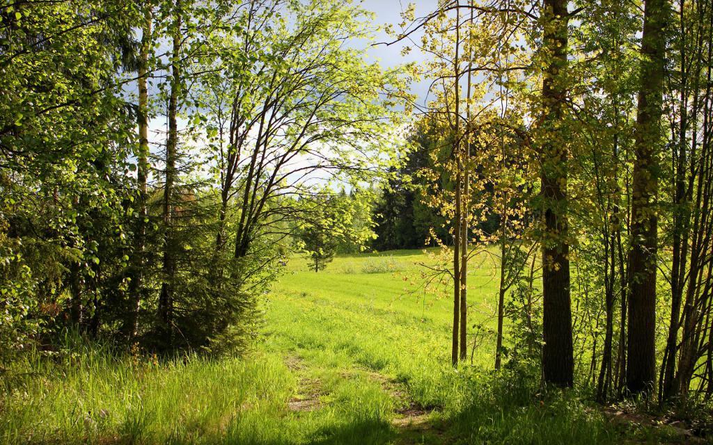 обои на тему лето, лес, природа, 1920 на 1200 пикселей