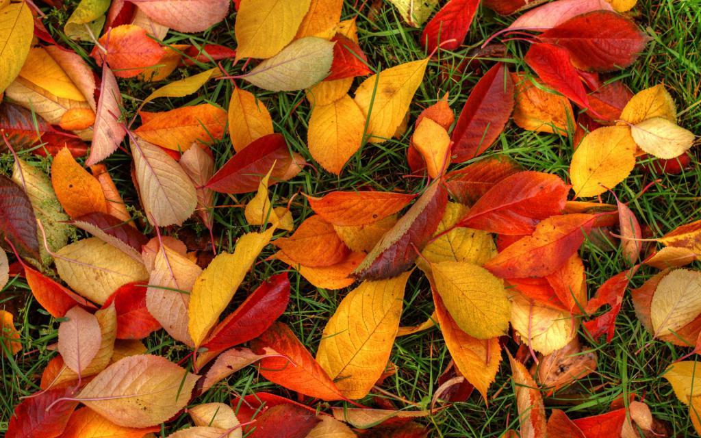 Осенние листья, 1920 на 1200 пикселей