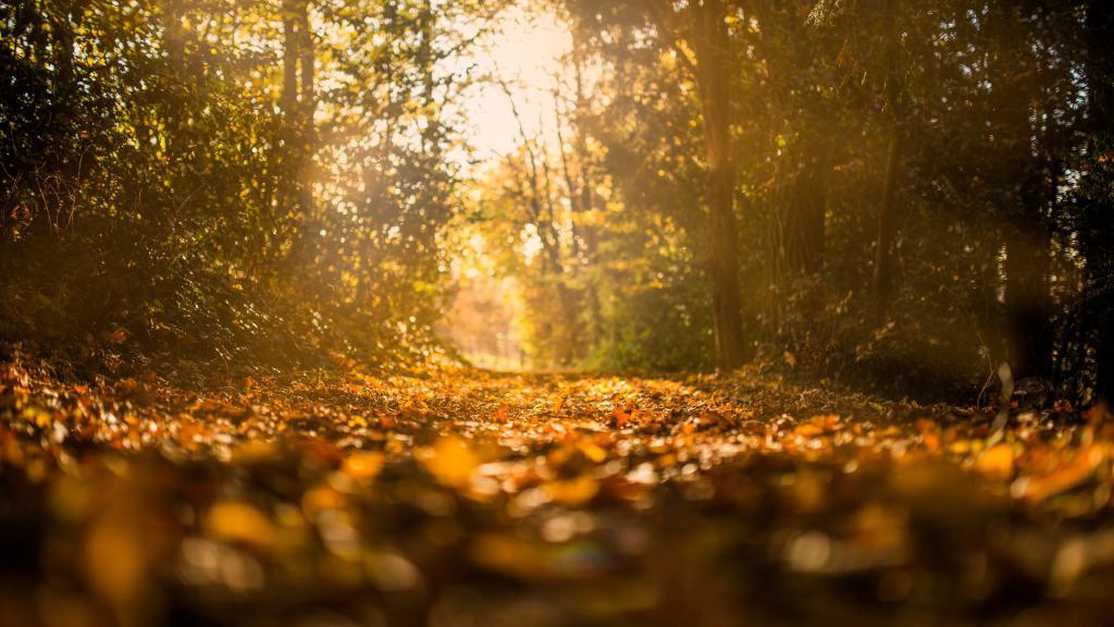 Осенний лес, заставка листья осень, 4k ultra hd, 3840 на 2160 пикселей