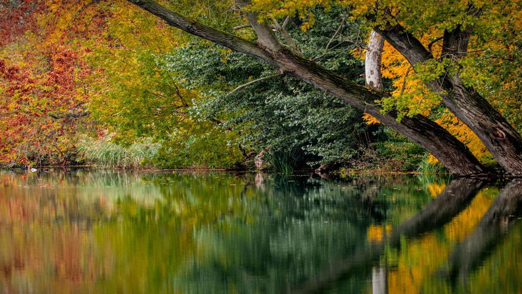 Осенняя листва у озера, скачать обои на планшет природа, 3840 на 2160 пикселей