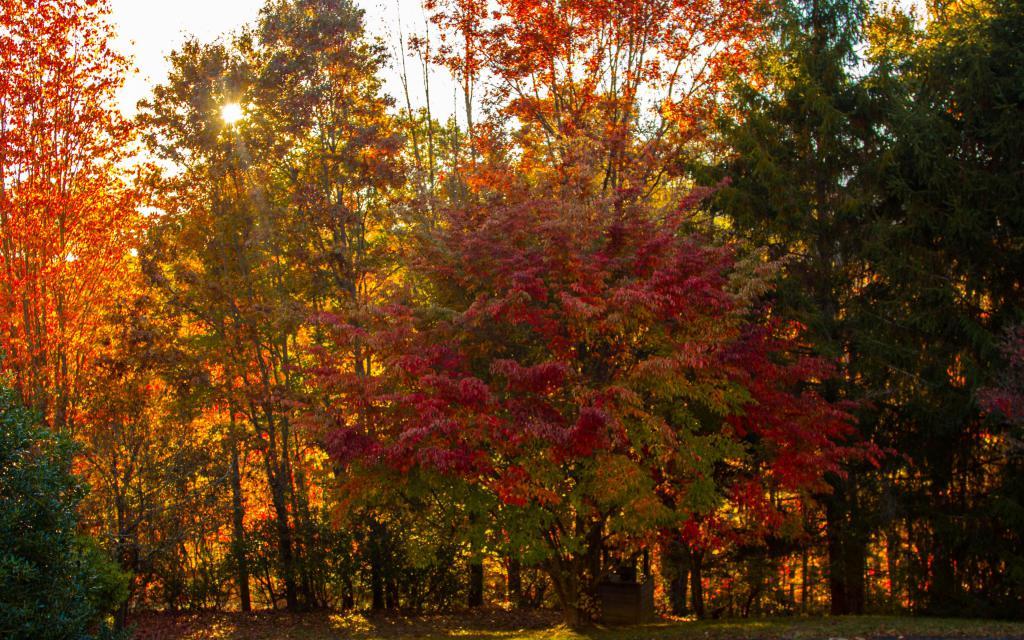 Яркие осенние деревья, 4k full hd Wide 16:10, красивая осень картинки для заставок бесплатно, 3840 на 2400 пикселей