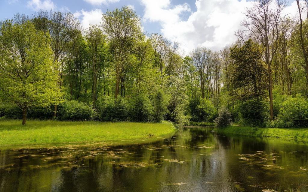 Красивая природа летом у озера, обои лето скачать на андроид, 2560 на 1600 пикселей