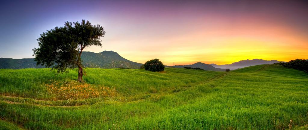 Красивое зеленое поле летом, обои на телефон вертикальные лето, summer wallpapers, 2560 на 1080 пикселей