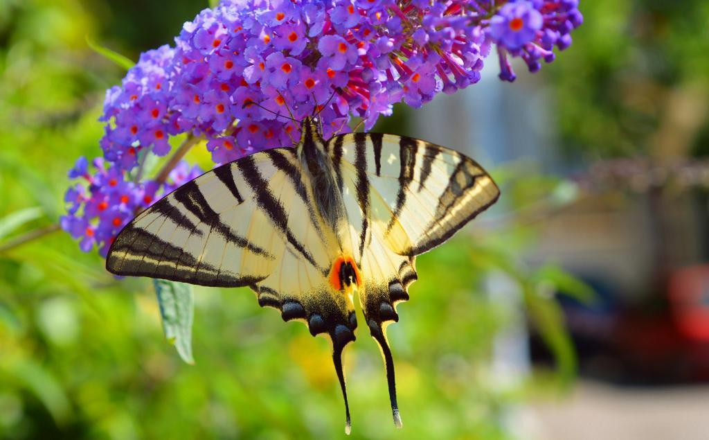 Красивая бабочка на цветке, 2950 на 1830 пикселей