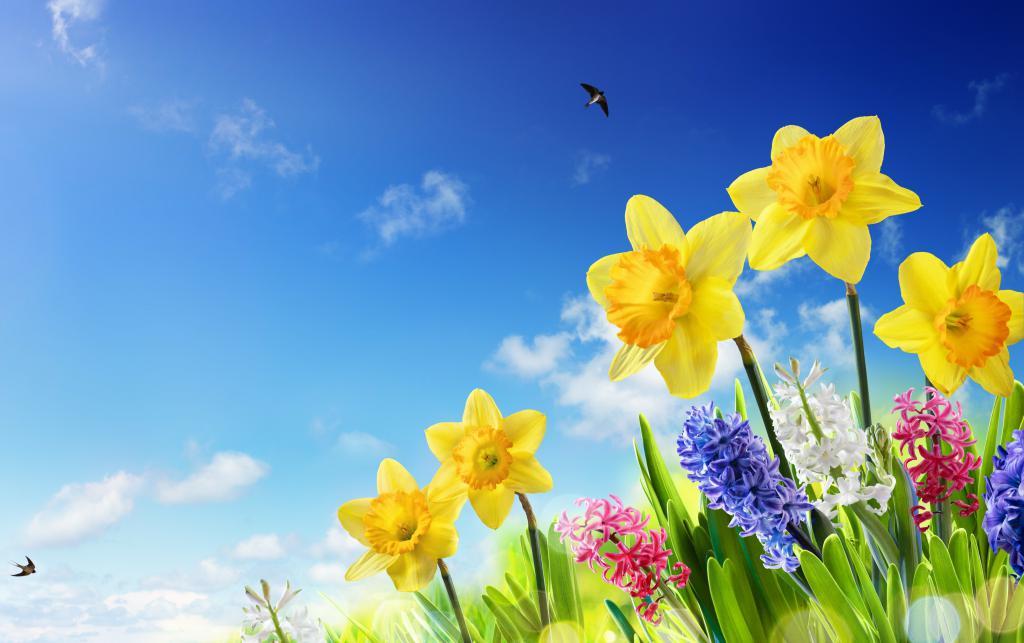 Весенние жёлтые и разноцветные цветы, 4096 на 2575 пикселей