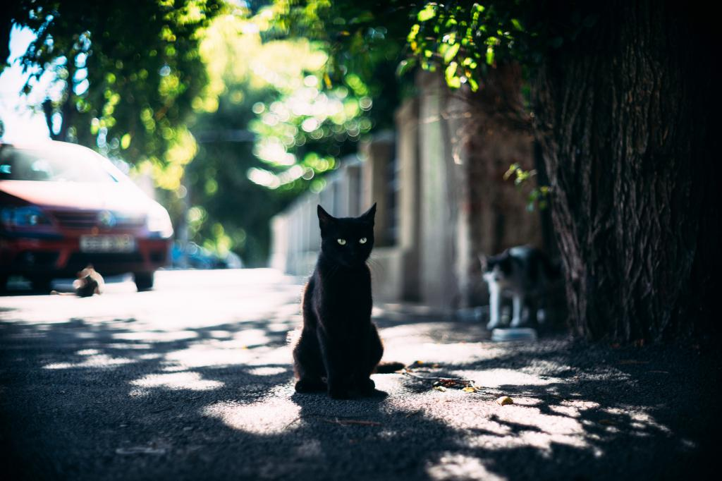 Черный зеленоглазый кот 4k Ultra, 5999 на 3999 пикселей
