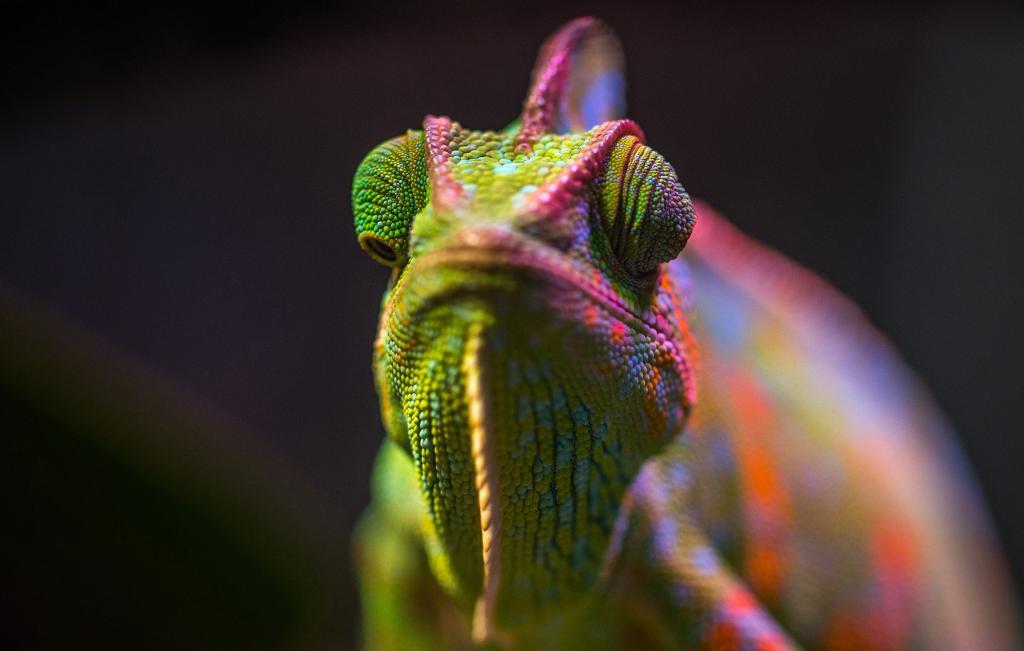 Разноцветный хамелеон макросъемка, chameleon wallpaper 4k hd, 3395 на 2160 пикселей