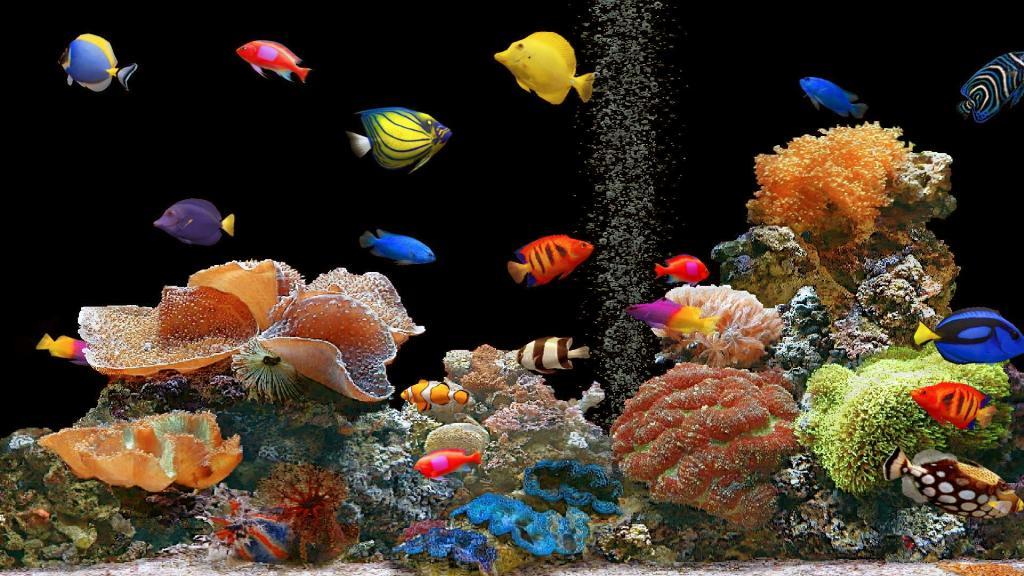 Красочные рыбки в аквариуме на черном фоне, обои на телефон про Животных, 3840 на 2160 пикселей