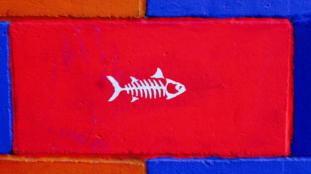 Скелет рыбы на красном фоне, обои с рыбами, 2560 на 1440 пикселей